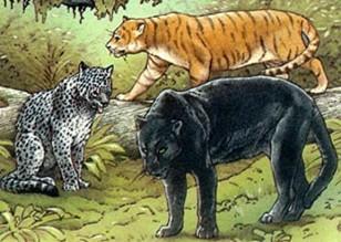 Three Peruvian mystery cats, Peter Visccher-BBC Wildlife Magazine