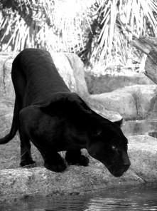 L. Carver Panther Art Deco Sculpture Bronze Black Patina