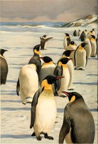 -penguins